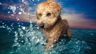 Chiêm ngưỡng những bức ảnh đẹp nhất về chó đã đạt giải tại cuộc thi 'Dog Photographer of the Year'