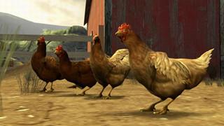 Counter-Strike Mod: Đấu gà thay cho bắn súng trong bản mod mới