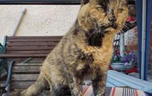 Cận cảnh chú mèo già nhất thế giới vẫn sống khỏe mạnh bên chủ của mình