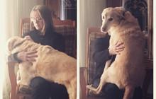21 chú chó to xác nhưng lại có tâm hồn rất mong manh