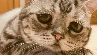 Gặp gỡ Luhu - Chú mèo buồn bã nhất hệ mặt trời