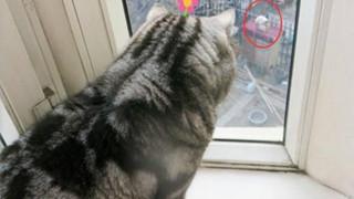 Boss cứ nhìn ngoài cửa sổ suốt cả tiếng đồng hồ, Sen tò mò lại xem và phát hiện cảnh tượng kinh hoàng