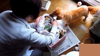Mèo cưng đột nhiên qua đời, chó già nhất quyết cắn khăn không cho chủ đem chôn, hóa ra nguyên nhân lại là…
