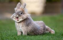 17 khoảnh khắc của những chú thỏ bé nhỏ khiến bạn phải xao xuyến con tim