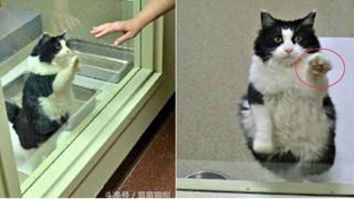 Cái kết có hậu cho cô mèo già 13 tuổi luôn làm động tác đáng yêu để tìm chủ