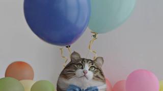Bộ ảnh Photoshop các loài động vật trở nên tròn vo như bóng bay đáng yêu không tưởng