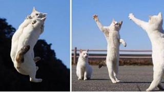 2 con mèo trắng đánh nhau có cả 'trọng tài', cảnh tượng ghi lại khiến dân mạng phì cười 'Hình như chúng đang nhảy điệu Tango!'