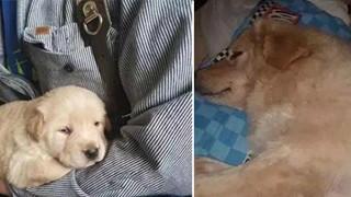 7 đứa con mất trong đám lửa, chó mẹ đau khổ không thiết ăn uống! Không ngờ chủ nhân đã tìm được con cho nó…