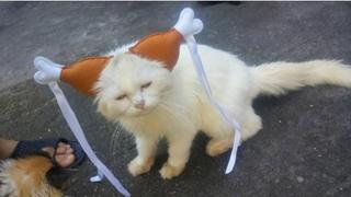 Chụp ảnh Mèo hóa Cô Long cùng bè lũ buồn cười đến phát sợ khiến cho cư dân mạng phải ngã lăn ra thán phục