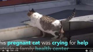 Mèo mẹ tự đến phòng khám xin đẻ khiến mọi người kinh ngạc