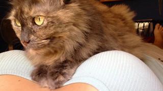 15 bằng chứng cho thấy mèo chính là đám phiền toái nhất trần đời
