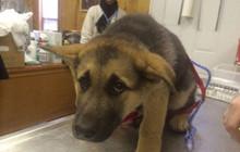 15 chú cún khi thấy đi thú ý là sợ đến phát khiếp