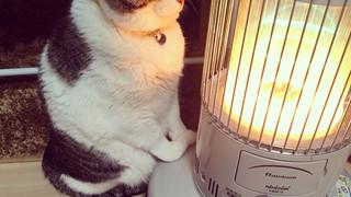 Buồn cười với chú mèo chỉ thích ôm lò sưởi mãi không thôi