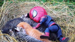 Hài hước cảnh Spider-Man đánh vật với thú cưng của mình