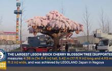 LegoLand Nhật Bản làm hẳn một cây hoa anh đào bằng LEGO kỉ niệm 1 năm khánh thành