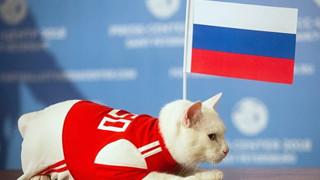 Chú mèo tiên tri tiên đoán rằng Nga sẽ thắng Saudi Arabia trong trận mở màn World Cup 2018