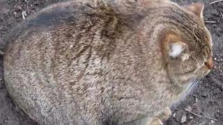 Béo ú na ú nần thế này, các 'boss' mèo vẫn có thể làm tim 'sen' tan chảy DỄ THƯƠNG 1 tháng tr