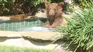 Chú gấu tỉnh bơ đi đón hè trong nhà người lạ: Tắm táp, uống rượu, ngủ nghỉ 2 tiếng rồi mới chịu ra về