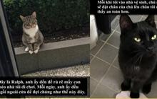 Loài mèo âm mưu thống trị thế giới, bắt đầu từ… Snapchat