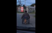 Khoảnh khắc cảm động: Chú chó vàng ngày ngày đủn xe lăn đưa ông chủ khuyết tật đi chơi phố