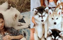 Chọn ra chú chó cưng đáng yêu nhất cho 12 cung hoàng đạo