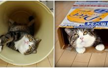 Những chú mèo nổi tiếng thế giới thu về bộn tiền nhờ nghề 'độc'