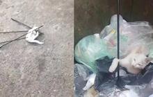 Trung Quốc: Sinh viên dùng cung tên bắn chết mèo, cả trường phẫn nộ đòi đuổi học