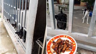 Câu chuyện 'cô gái nướng thịt và 3 con boss hàng xóm' khiến dân mạng một phen cười bể bụng