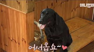 Hàn Quốc: Cô chó nổi tiếng MXH với 7 năm kinh nghiệm làm phục vụ bàn
