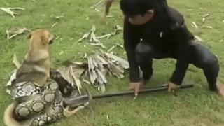 Video: 3 đứa trẻ liều lĩnh bắt rắn bằng tay không cứu chó nhà