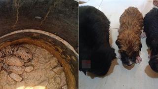 Cuộc giải cứu gây 'sốt' nhất MXH hôm nay: 5 chú cún con thoát chết gang tấc từ đáy giếng bùn