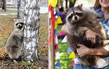 Chú gấu mèo mập ú ở Nga bất ngờ trở thành 'ngôi sao' trên Instagram