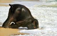 Cười không nhặt được mồm với những tư thế ngủ vô cùng bá đao của các loài động vật