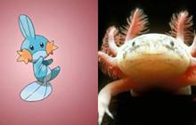Tổng hợp những Pokemon được lấy ý tưởng từ những loài động vậy ngoài đời thật