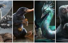 20 sinh vật huyền bí khó tìm nhất từng xuất hiện trong Fantastic Beasts And Where To Find Them