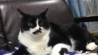Chú mèo nói ngôn ngữ ngoài hành tinh khiến loài người hoảng loạn