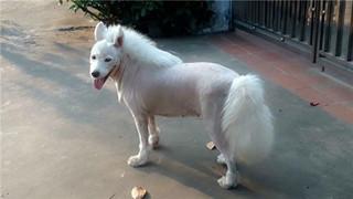 'Ngựa Bạch Long' trong truyền thuyết là có thật, người nhìn phải câm nín vì quá đẹp
