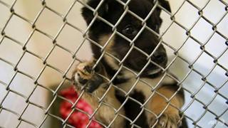 Tổ chức bảo vệ động vật hàng đầu Hàn Quốc bị tố giết hại hàng trăm con chó để kiếm thêm tiền quyên góp