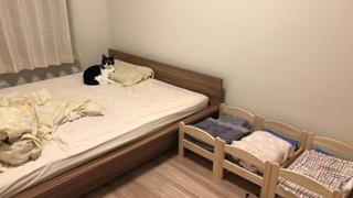 Con sen mua 3 cái giường về cho Hoàng thượng ngủ, nó liền tỏ thái độ lồi lõm đuổi Sen xuống 3 cái giường đỏ mà ngủ