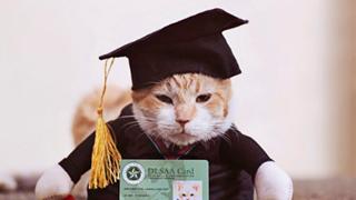 Chú mèo ở Philippines được tổ chức lễ tốt nghiệp đại học