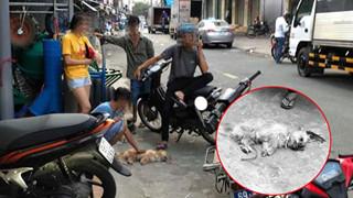 Thanh niên đánh chết chú chó nhỏ vì tè bậy ngoài đường: Có cần thiết phải nhẫn tâm như thế?
