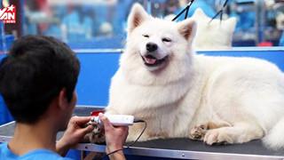 Dân mạng kéo nhau đi đăng ký chăm sóc cún cho Tổng lãnh sự quán Mỹ: Yêu cầu biết ngôn ngữ chó