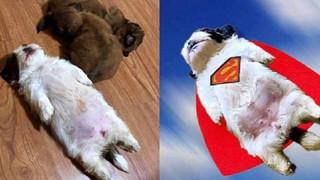 Em cún bất ngờ nổi tiếng vì dáng ngủ quái lạ, trở thành nguồn cảm hứng chế ảnh bất tận trên MXH