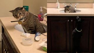 Lần đầu gặp chó - Hoàng thượng sợ hãi trốn luôn trong bồn rửa tay không chịu ra ngoài