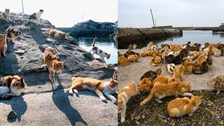"""Đến thăm đảo mèo lớn nhất Nhật Bản, hội """"con sen"""" đến đây thì đảm bảo sướng phát ngất!"""