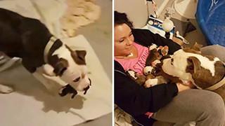 Được cưu mang, chó mẹ đưa 11 cún con vào lòng cô nhắn nhủ: 'Đây là nơi an toàn nhất!'