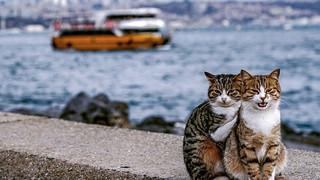 Hình ảnh đôi mèo âu yếm đầy tình cảm trên bến cảng khiến hội FA suy sụp: 'Đến lũ mèo cũng còn có nhau'