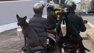 """Chú chó giúp chủ đi ship trà sữa: Đúng """"chó nhà người ta"""" không bao giờ làm bạn thất vọng!"""