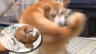 Khoảnh khắc chú chó Shiba quay đầu 'tung nắm đấm không trượt phát nào' như Saitama bất ngờ gây sốt trên MXH