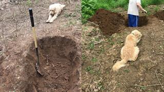 Nhói lòng khoảnh khắc chú chó nằm nhìn người chủ đào huyệt mộ cho mình
